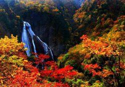 Kinh nghiệm khi đi du lịch Nhật Bản