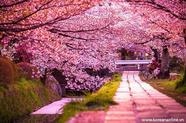 Mùa xuân thơ mộng ở Hàn Quốc là thời điểm du lịch tuyệt vời