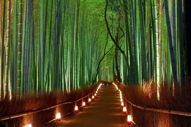 Ban đêm rừng tre Sagano càng quyến rũ hơn với những ánh đèn huyền ảo