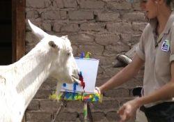 Vườn bách thú Houston – điểm tham quan hút khách trong hè này