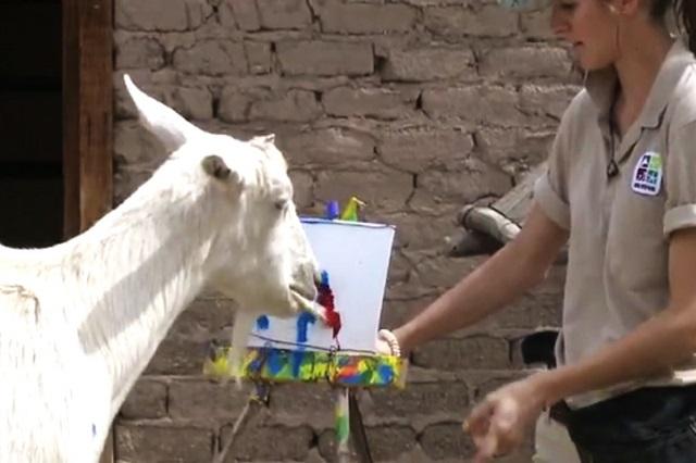 Vườn thú Houston – điểm đến yêu thích của mọi du khách