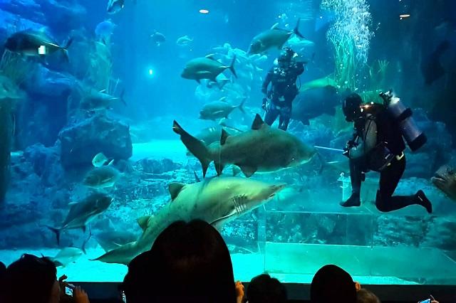 Busan Aquarium là điểm du lịch lý tưởng để bạn khám phá các sinh vật biển