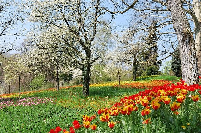 Cảnh sắc mùa xuân ở Toronto