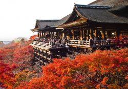 3 địa danh linh thiêng nên ghé thăm một lần khi đến Kyoto