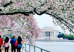 Những sự kiện mùa xuân nổi bật ở Mỹ