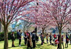Những sự kiện và lễ hội mùa xuân nổi bật ở Vancouver