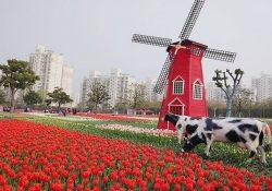Những lý do nên chọn du lịch Thượng Hải mùa xuân
