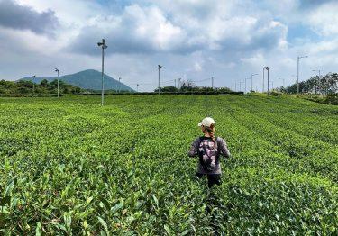 Những trải nghiệm thú vị bạn chỉ có thể tìm thấy ở Jeju